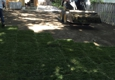 Adolfo Tree Service - Houston, TX. Grass installing in Houston Texas top rated service