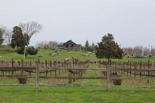 Arrington Vineyards in Arrington, TN
