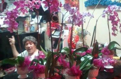 Jack The Florist - Hialeah, FL