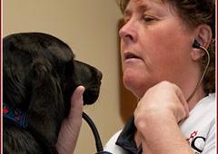 Shawnee Animal Clinic - Portsmouth, OH