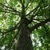 American Tree Experts & Landscaping