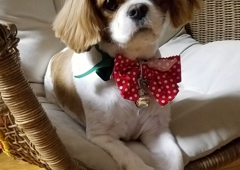 ClipArt Canine Coiffure Housecall Dog Grooming - New York, NY