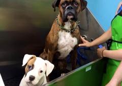 Bark n wash dog grooming self serve dog wash 15426 e orchard road bark n wash dog grooming self serve dog wash aurora solutioingenieria Gallery