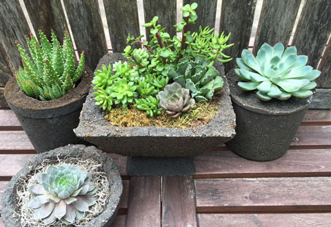 Landscaping Trends for 2016