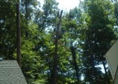 Holcomb's Tree Experts Co - Knoxville, TN