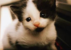 Porter County Pet Clinic - Valparaiso, IN