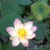 Allclear Pond Management