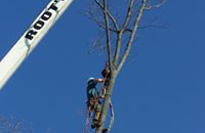 Quinlan Tree Service - Milford, MI