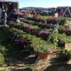 White's Farm and Flea Market