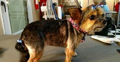 Classie Dawg Pet Grooming - Ringgold, GA