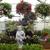 Charvet's Garden Center Inc