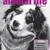 Animal Laughter Studio and Animal Life