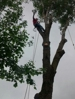 Large tree removal.