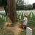Alleys Tree Service