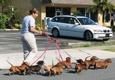 Boynton Pet Clinic - Boynton Beach, FL