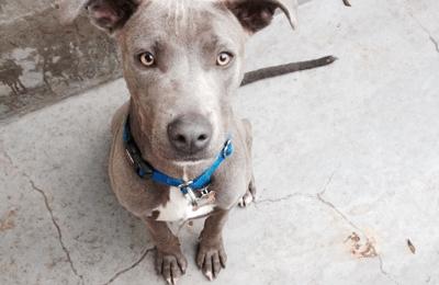 Best Friends Animal Shelter - Mission Hills, CA