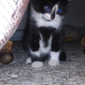 Love Four Paws Rescue, Inc. - Cleveland, OH