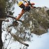 Arborist Standards Tree Care