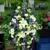 Mauldin's Flowers, Inc.