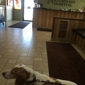 Carson Valley Veterinary Hospital - Minden, NV. Jax loving his visit.