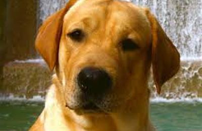Linda's Dog Grooming - Cumberland, RI