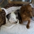 Cape Veterinary Practice