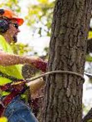 Jesse James Tree Service & Landscape