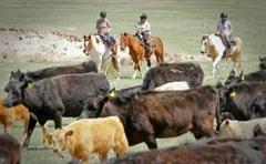 Colorado Cattle Co & Guest Ranch