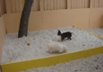 Rios Pet Spa and Boarding - Miami, FL