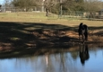 The Vittetoe Farm - Chickamauga, GA