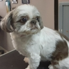 Look At Me Pet Styling & Grooming