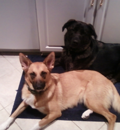 Pups To Pooches, LLC - Peachtree Corners, GA
