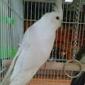 Louis Birds Pets & Supplies - San Jose, CA