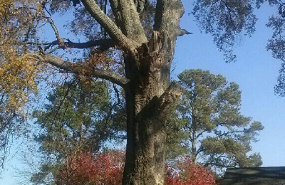 Affordable Carolina Tree Service - Gaston, SC