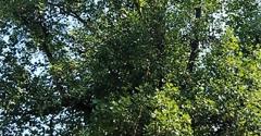 County Tree Service - Valley Park, MO