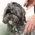 Astro Dog Grooming