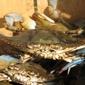 Waterman's Pride Seafood - Nottingham, MD