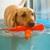 Canine Rehabilitation & Conditioning Group, LLC
