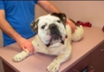 Rodeo Drive Veterinary Hospital - Mesquite, TX