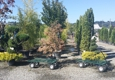 West Valley Nursery & Landscape Supply - Kent, WA