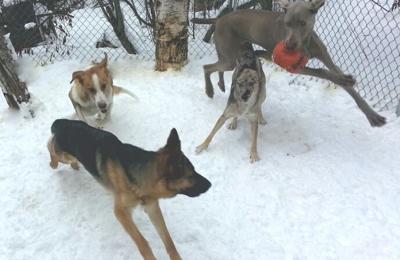 Dingo Design Pet Sitting - Wasilla, AK