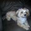 Styl'n Companions Pet Spa