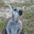 Fallin Pines Critter Rescue