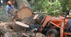 Riccabona's Landscape & Tree Service - Santa Cruz, CA
