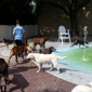 Arfington Pet Resort - Tamarac, FL