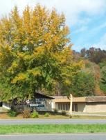 Fall at Carolina Mini Storage5624 Hwy 64 westMurphy, NC.       828 837 7702