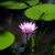 Aquarius Pets Plant Art
