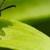 Antac Pest Control