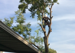 Sal's Landscape & Tree Service - Irving, TX