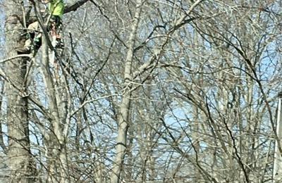 Chesapeake Tree Guys - Chesapeake, VA